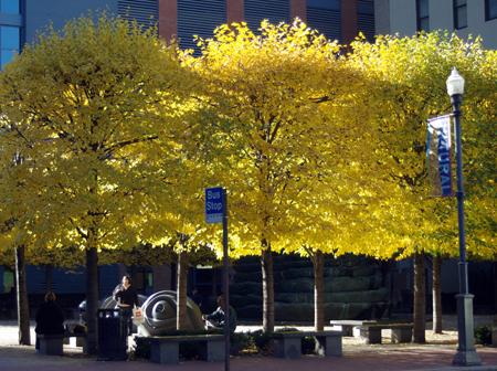 Under Yellow Trees