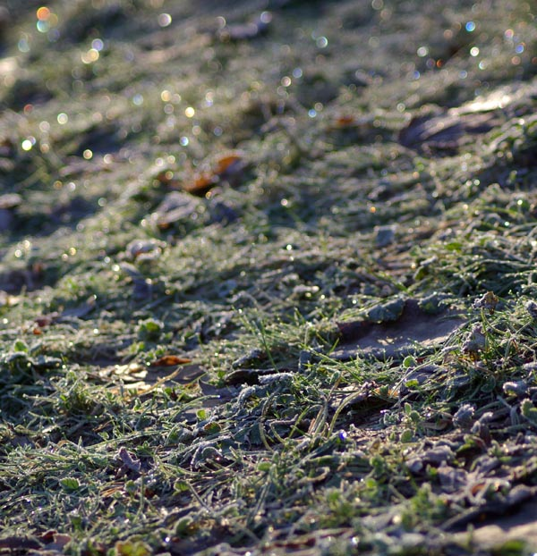 photo of frost on grass