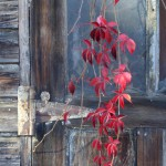 photo of red leaves in front of garage door
