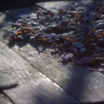 frost on table