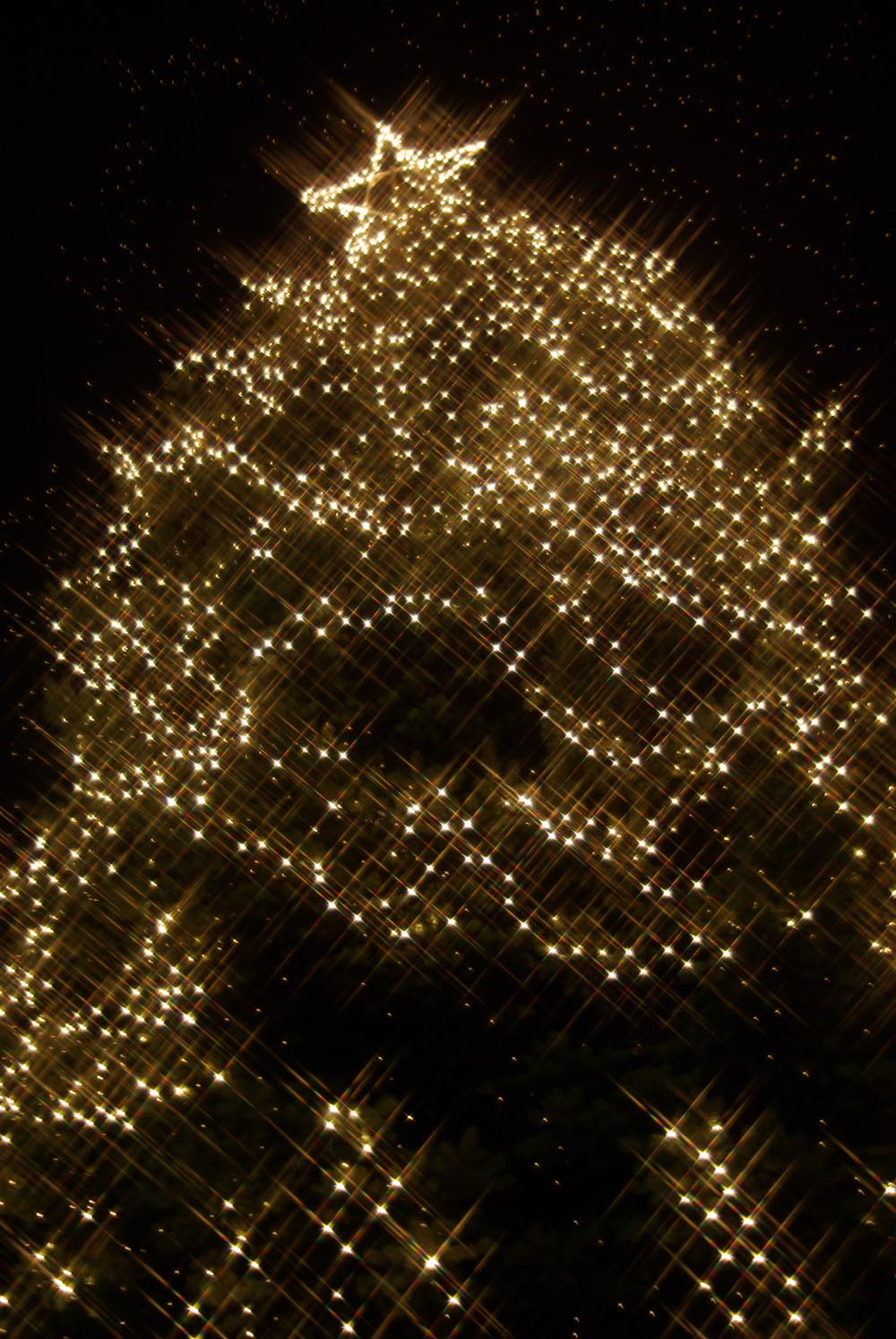 tree with lights