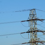 birds on electrical tower and wires