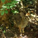 rabbit under tree