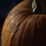 frost on pumpkin