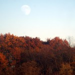 moonrise over oak trees