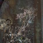 wildflowers by industrial items
