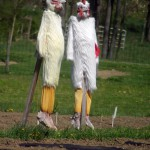 two chicken scarecrows