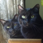 two black cats