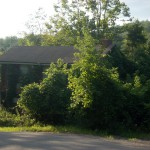 House overgrown with trees