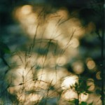 photo of grasses and sparkling water