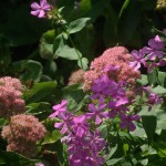 autumn joy sedum and pink phlox