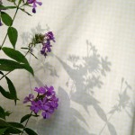 pink phlox shadows on yellow gingham sheets