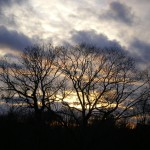 sunset with twisted trees