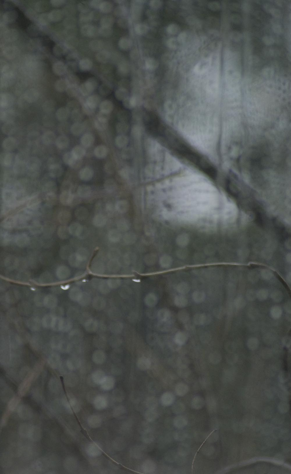 raindrops on window and twig