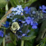 A Busy Bumblebee