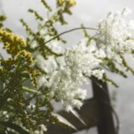 queen anne's lace and goldenrod
