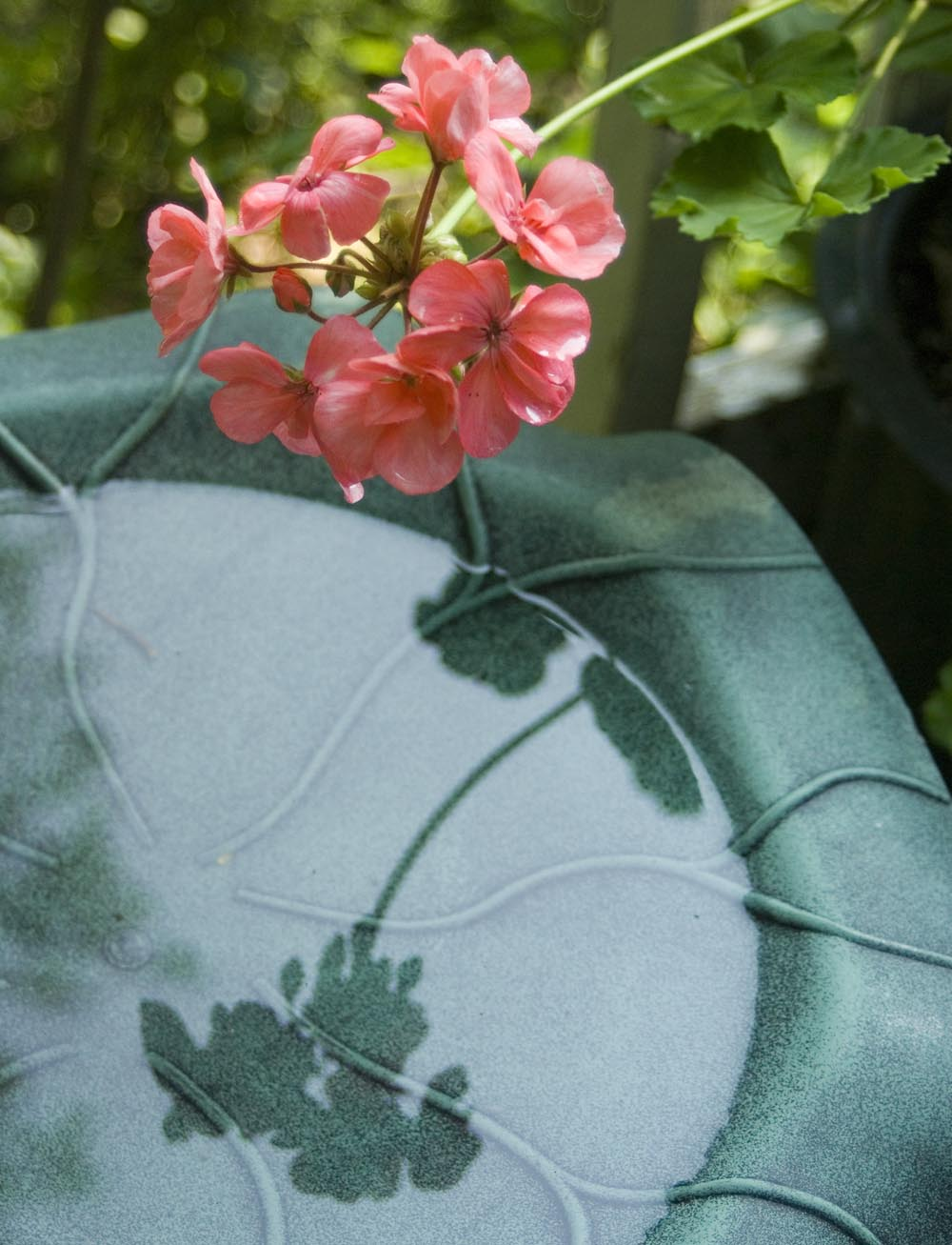 coral geranium and birdbath