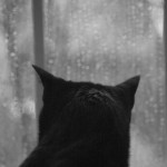 black cat looking out rainy window