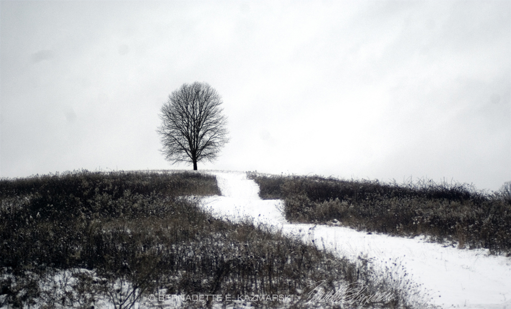 photo of tree in winter field
