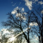 winter sun on bare trees