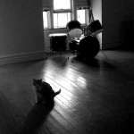 cat and drum set in empty room