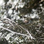photo of sparrows on branch
