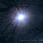 moon in bare tree branches