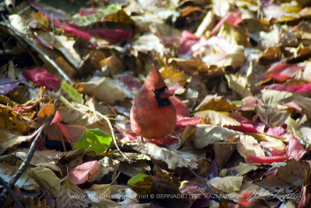 Cardinal Camouflage