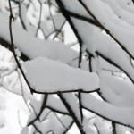 snow on twigs