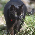 The Yard Panther
