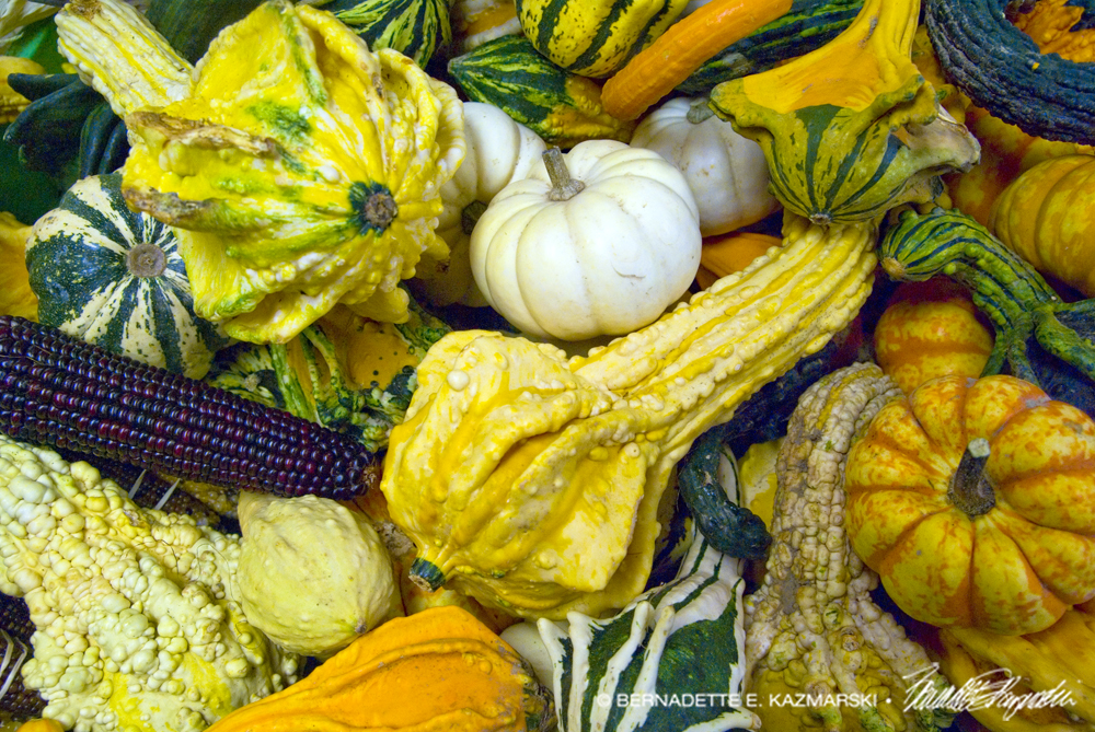 Gourds and Indian Corn