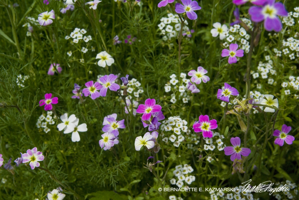 Tiny street flowers.
