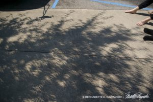 Crescent shadows on the ground from light speckles through the tree.