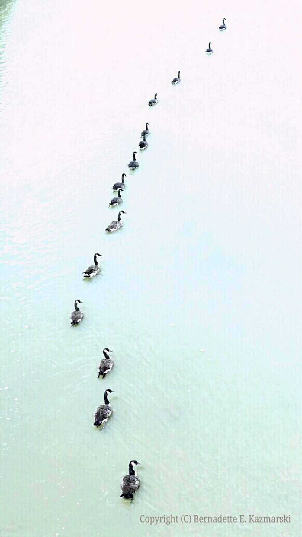 Get Your Geese in a Row