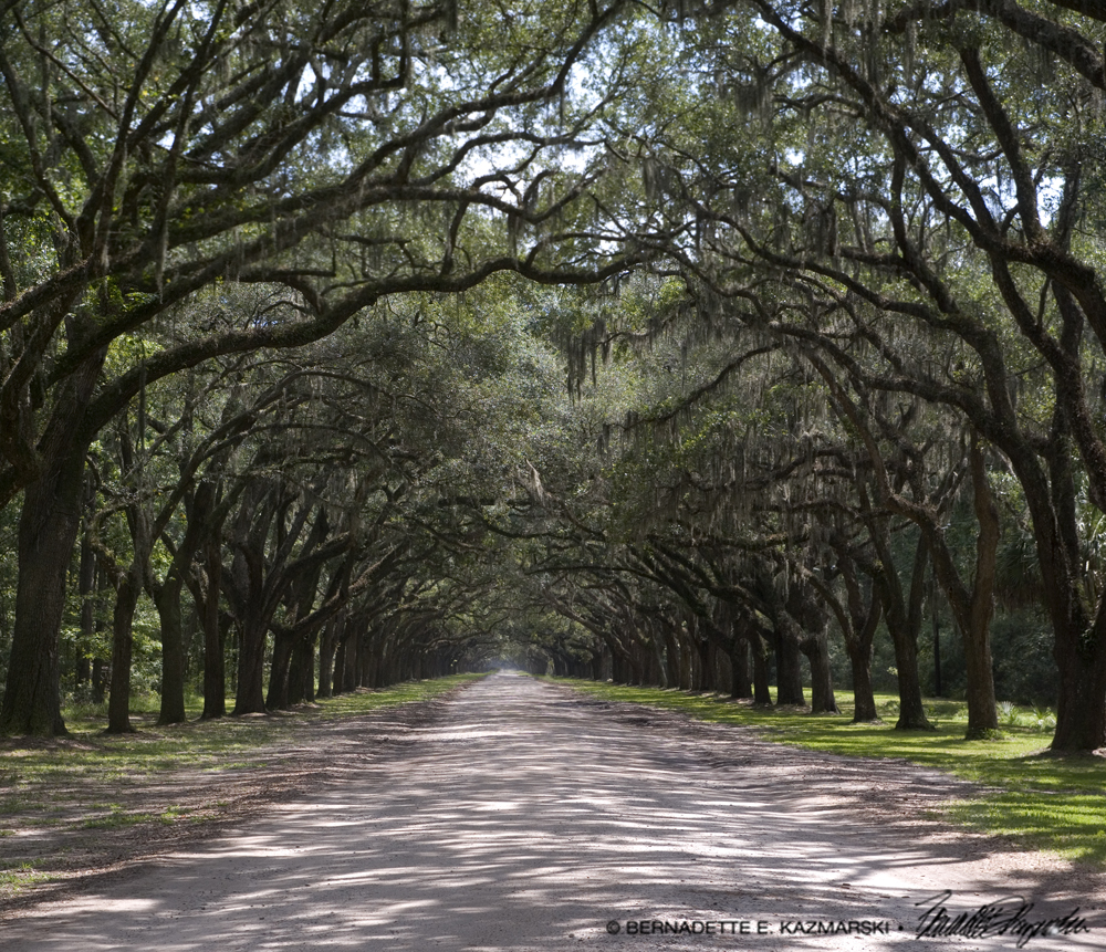 The entrance to Wormsloe State Historic Site