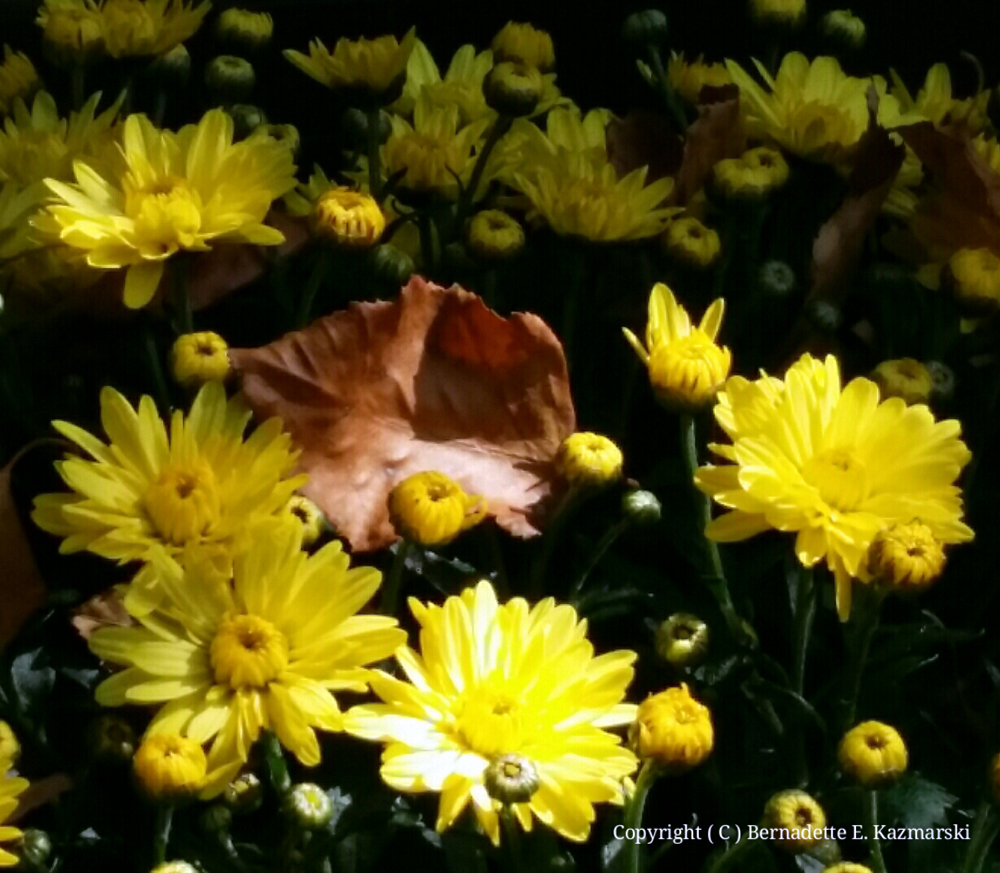 Autumn Yellow and Gold
