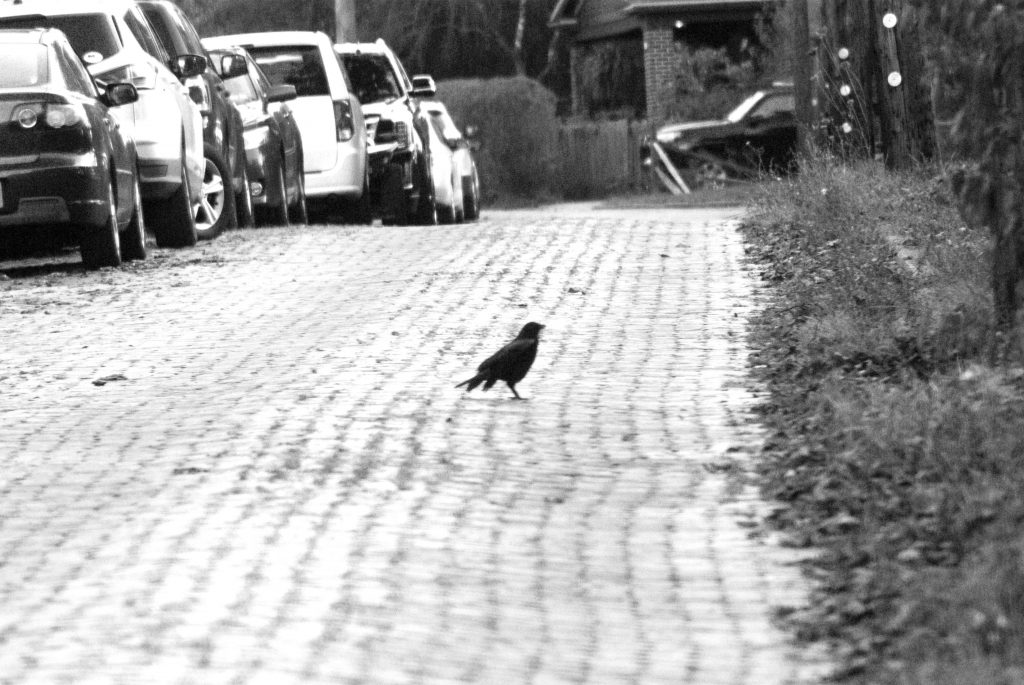 About the Crow