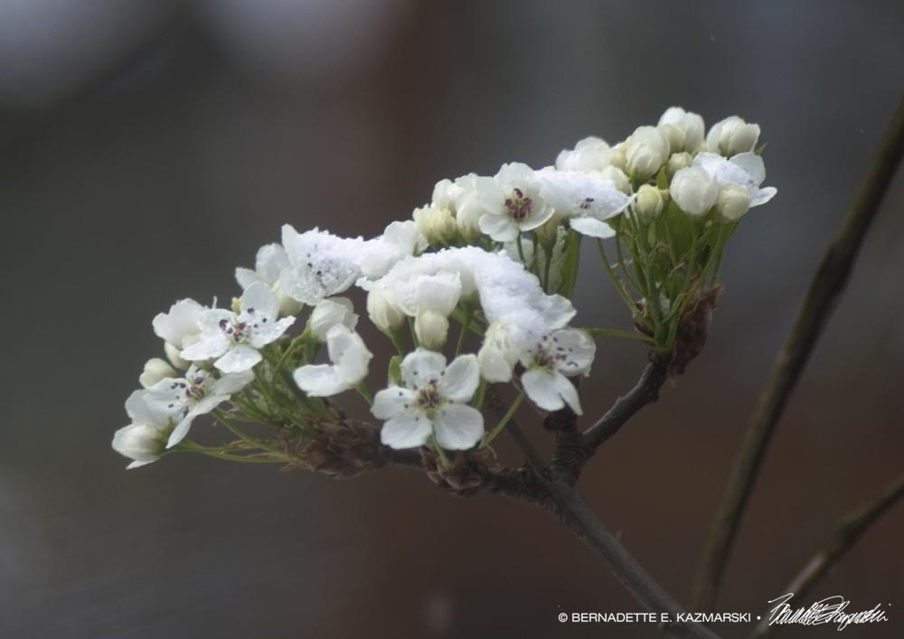 Snow filling the flowers.