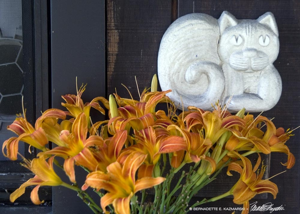 welcome kitty with daylilies