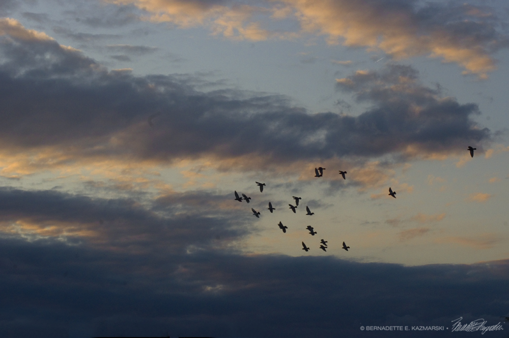 sunset with doves