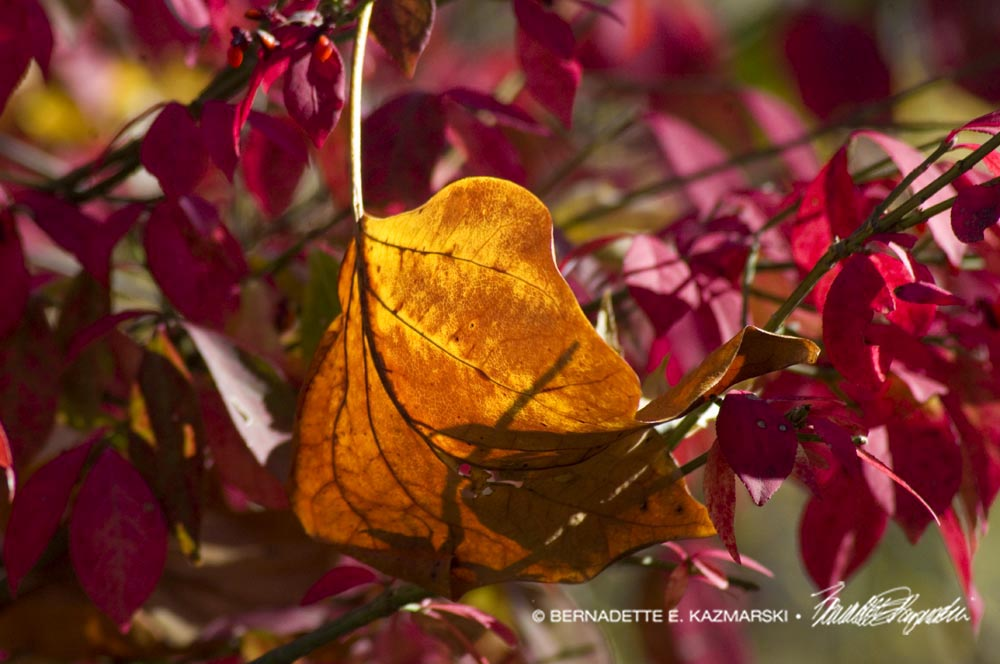 Orange and Red Leaves