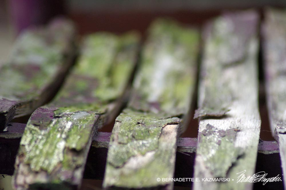 peeling mossy wood