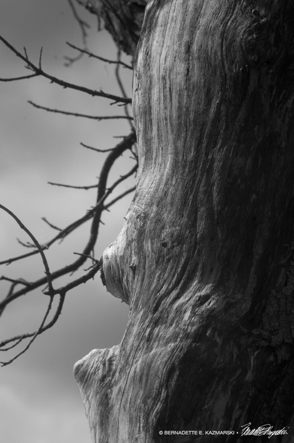 bare tree black and white