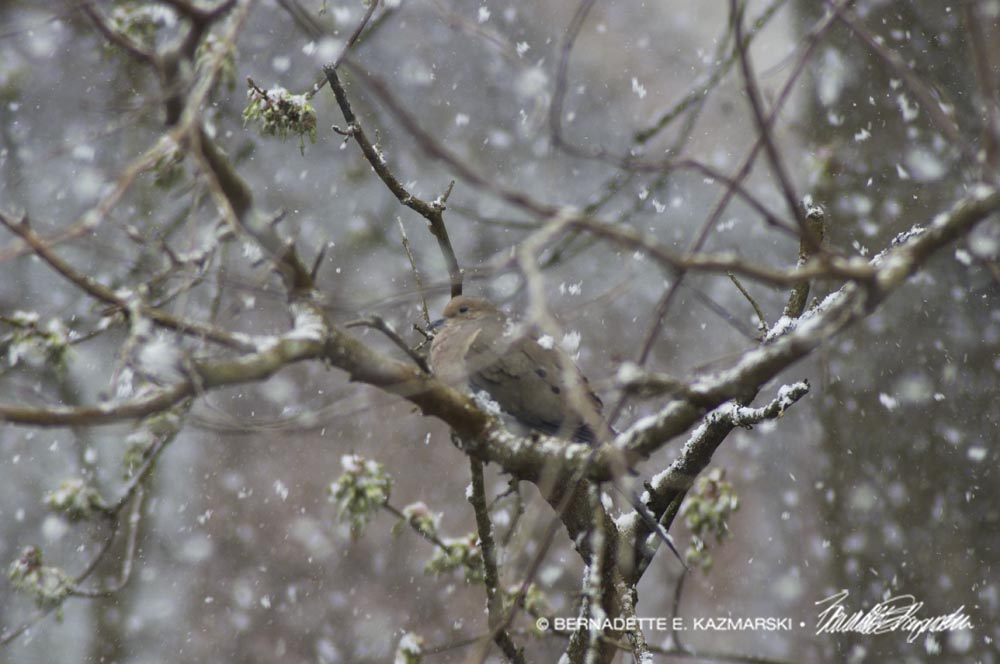 dove in a snowstorm