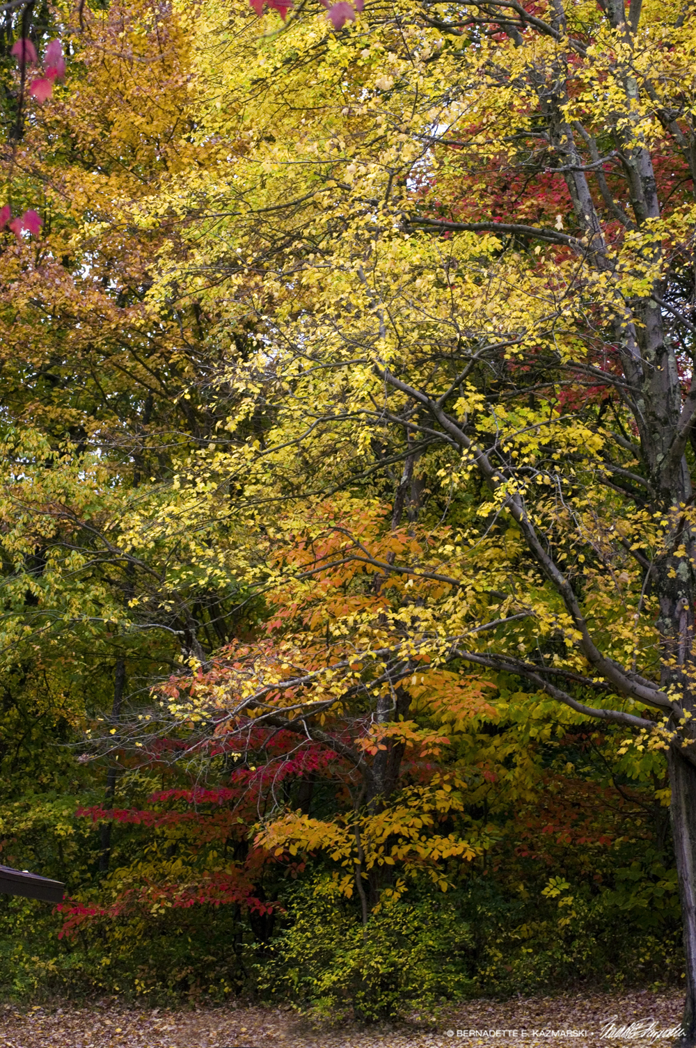 layers of colored leaves