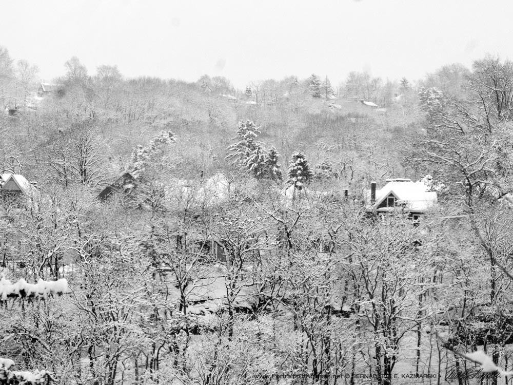 snow on houses and trees