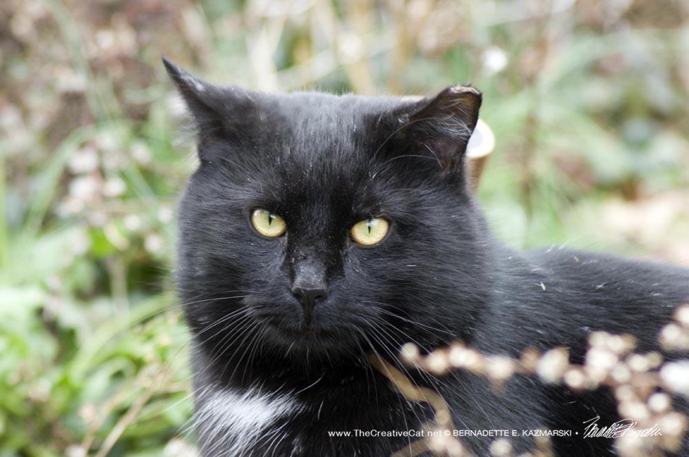black cat in weeds.
